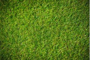 Travní koberec 21 - 50 m2